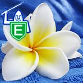 Evans Laundry Detergents