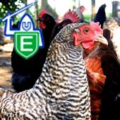 Evans Livestock Care